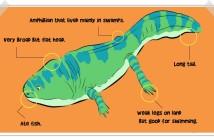 Metoposaurus description