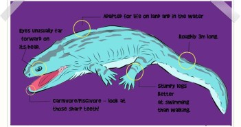 Koskinonodon description