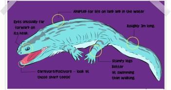 Koskinonodon description